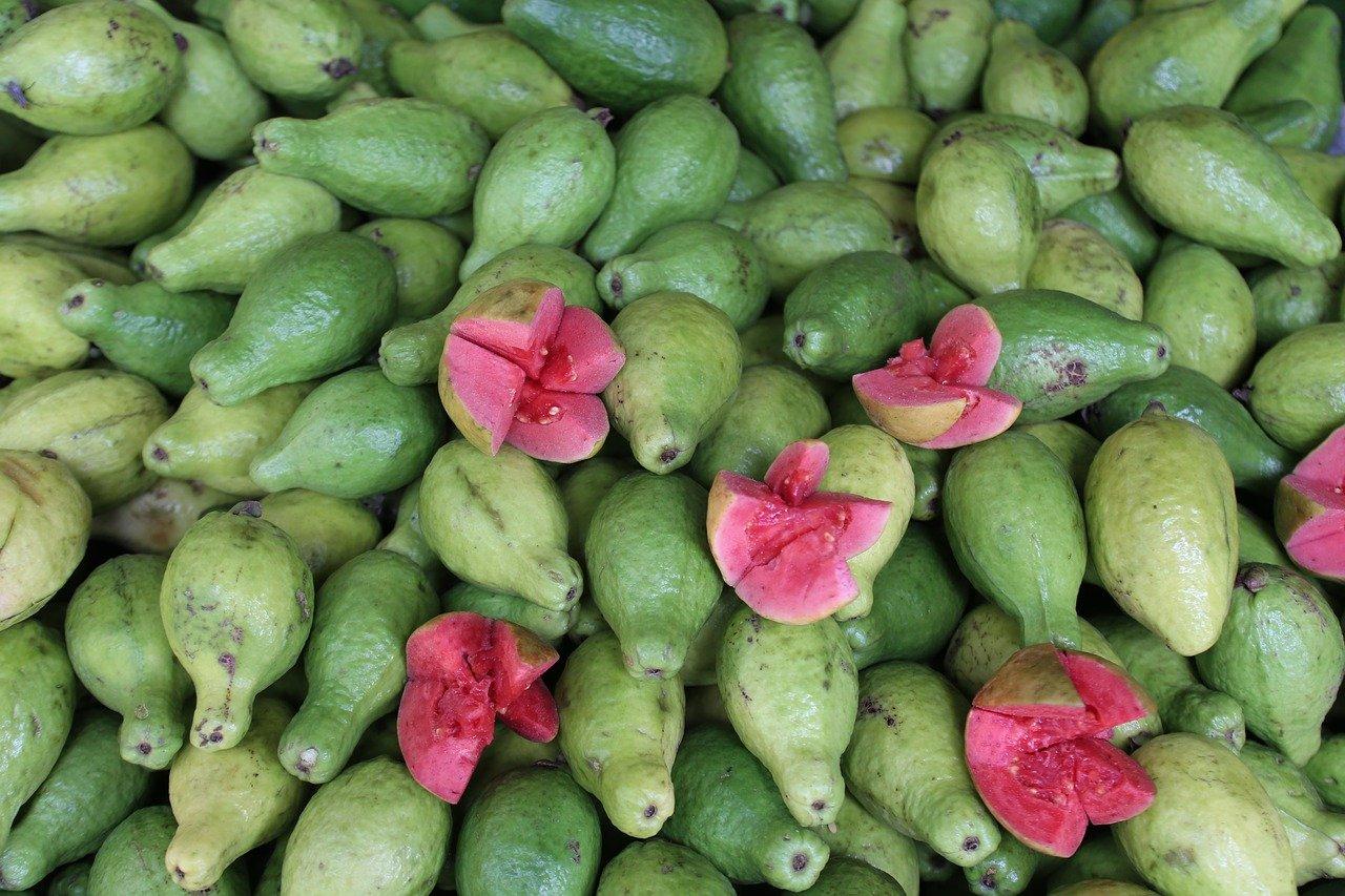 guava, fruit, healthy